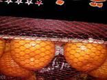 Цитрусовые - фото 1