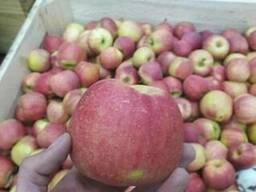 Apples fresh - photo 6