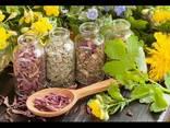 Лекарственное растительное сырье - photo 1