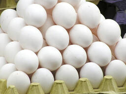 Top quality eggs for sale - photo 5